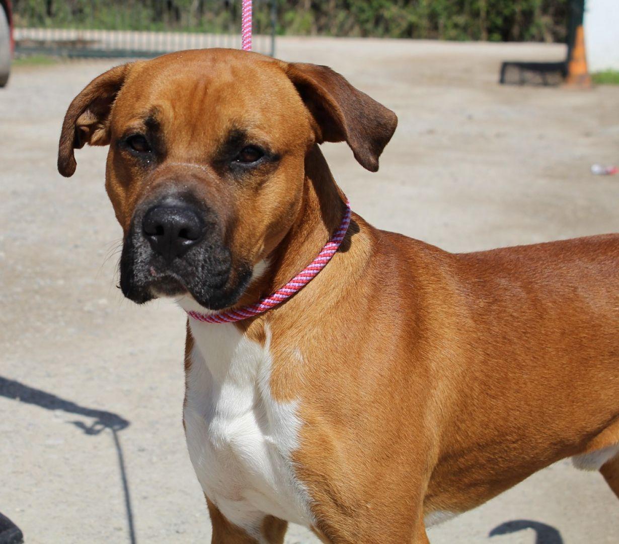 Lexi perro adopci n cruce adulto 2 a os perrera de los barrios - Perrera de vilafranca ...
